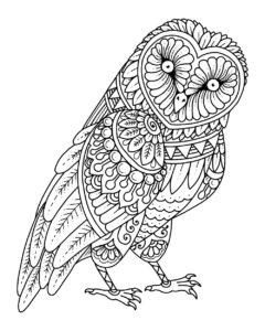 owls mandala